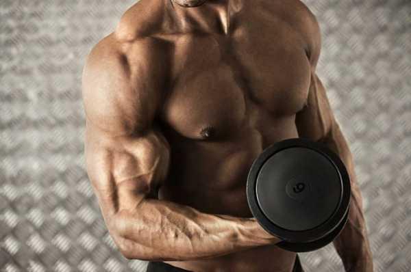Трицепс анатомия строение трехглавой мышцы плеча и функции